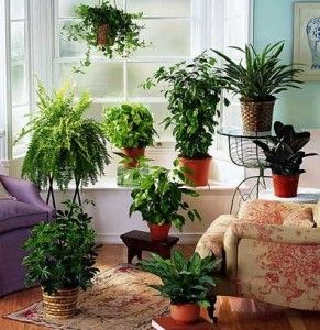 Домашня оранжерея для зайнятих і ледачих