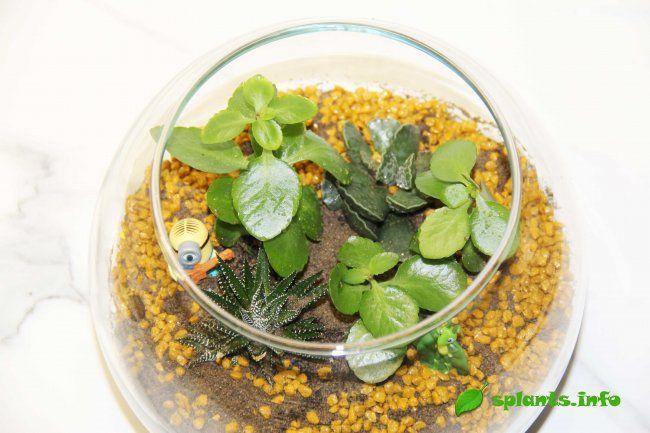 Флораріум: мініатюрний сад в пляшці