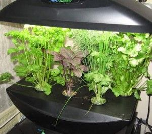 Метод вирощування без ґрунту