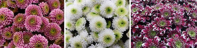Білі і бордові квіти