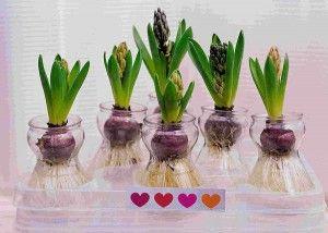 Як розмістити квіти будинку?