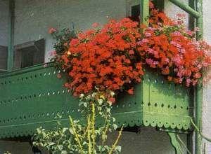 Як правильно озеленити балкон