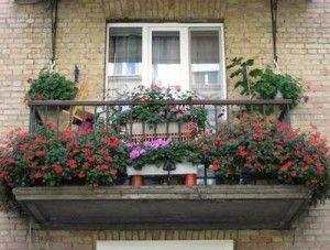 Як красиво і грамотно озеленити балкон