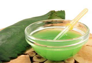 Корисні властивості соку каланхое