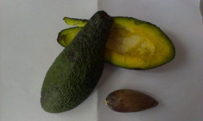 Правила і секрети вирощування авокадо з кісточки в домашніх умовах