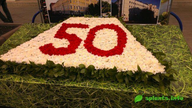 Свято квітів в оренбурзі. 2015