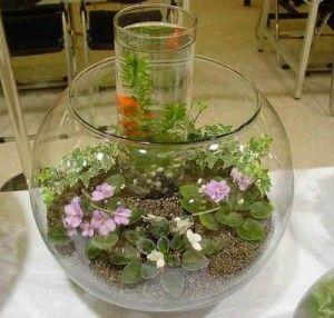 Оригінальний подвійний сад в пляшці