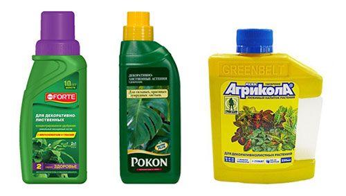 Найпопулярніші добрива для декоративно-листяних рослин