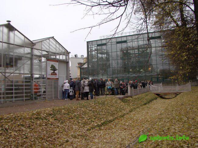 Виставка японських бонсай відкрилася в ботанічному саду мду